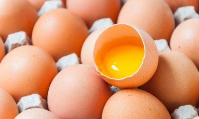 POULTRY ASSOCIATION OF NIGERIA CELEBRATES 2020 WORLD EGG DAY: Eat Your Egg Today And Everyday! - #WorldEggDay