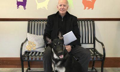 REPORT!!! United States President Elect, Joe Biden Injured By German Shepherd Dog